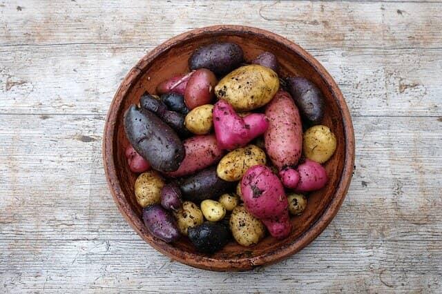 カラフルなジャガイモ