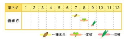 葉ネギの栽培カレンダー