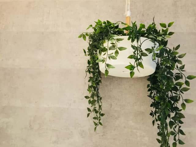 ハンギングした観葉植物