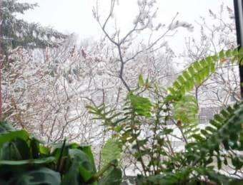 冬の窓辺の観葉植物