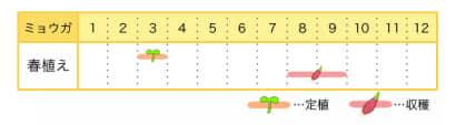ミョウガの栽培カレンダー