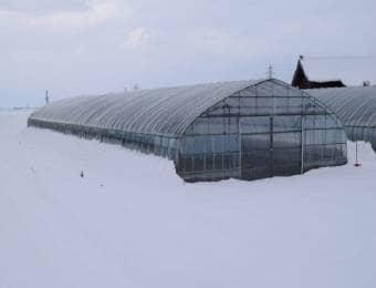 雪国のビニールハウス
