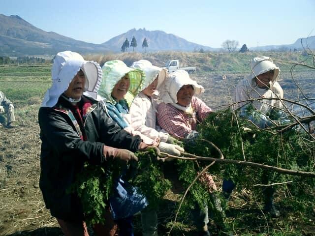 木を引っ張る女性農業者