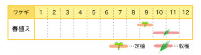 ワケギの栽培カレンダー