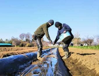 久松農園での研修