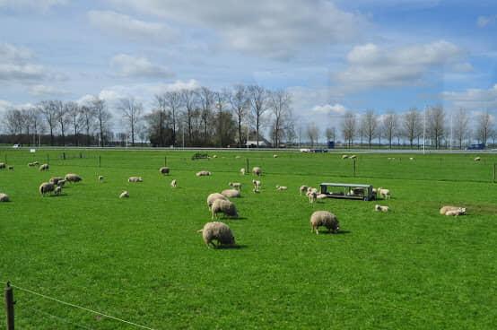 オランダの環境