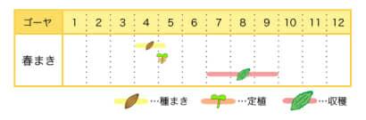 ゴーヤの栽培カレンダー