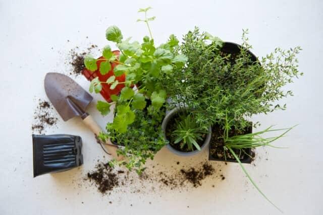 ハーブの苗とガーデニング用品