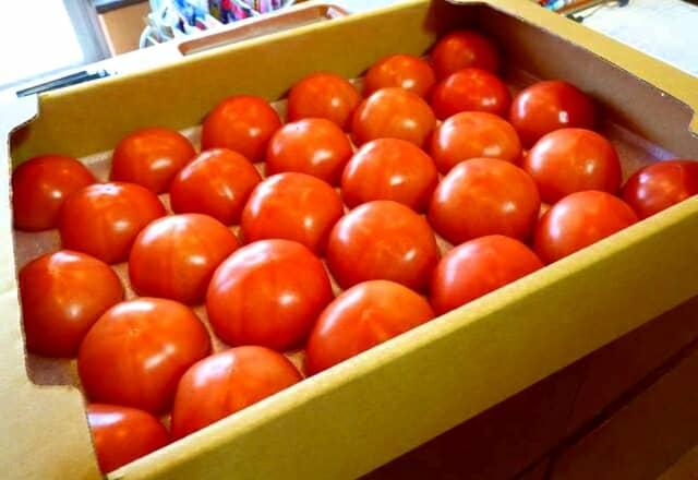 箱に入ったトマト