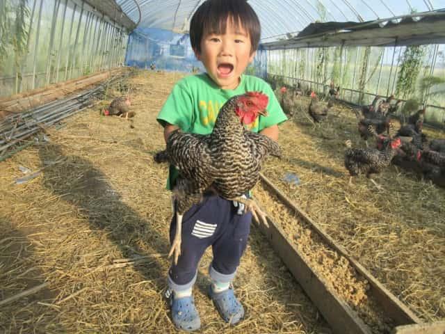 鶏を抱く子ども