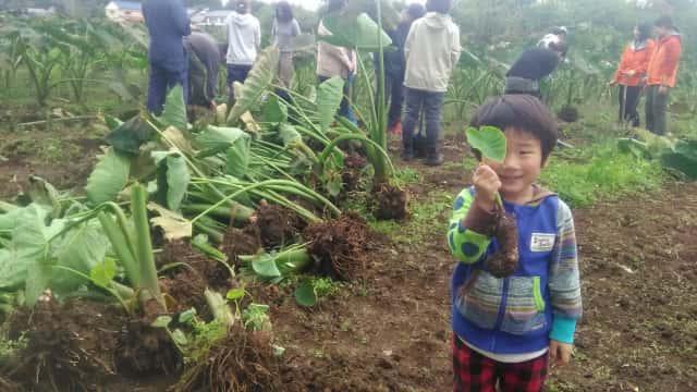 畑で野菜を持つ子ども