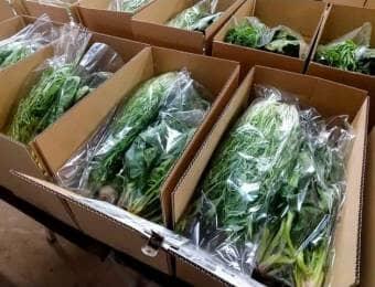 久松農園の野菜セット