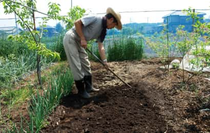 サトイモの土作り