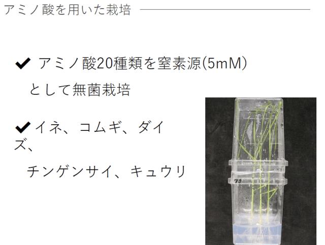 アミノ酸で植物は育つのか?