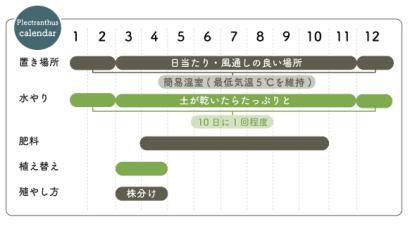 プレクトランサス栽培カレンダー