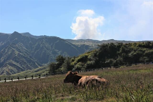 阿蘇山と赤牛