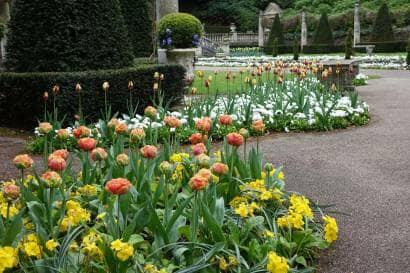 チューリップが咲くイギリスの庭
