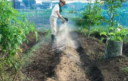 タマネギの土作り