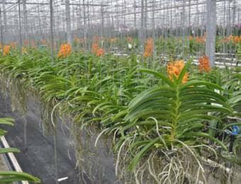 オランダの施設栽培