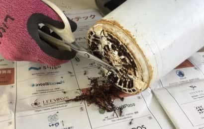 鉢底から出た根を切る