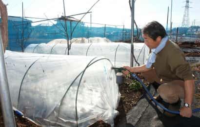 タマネギに液肥を施す福田先生
