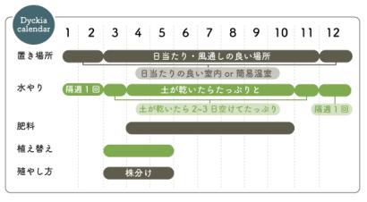 ディッキアの栽培カレンダー