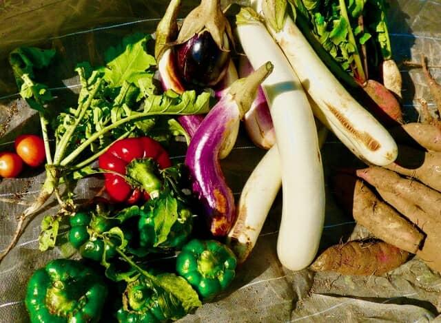 さまざまな野菜