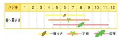 バジルのプランター栽培カレンダー