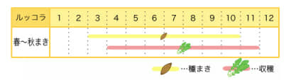 ルッコラのプランター栽培カレンダー