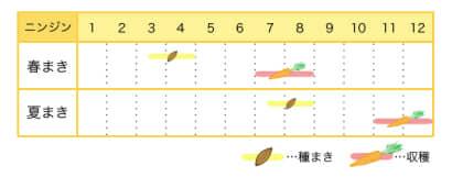 ニンジンのプランター栽培カレンダー