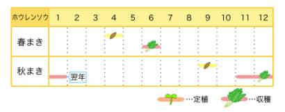 ホウレンソウのプランター栽培カレンダー