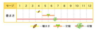 セージのプランター栽培カレンダー