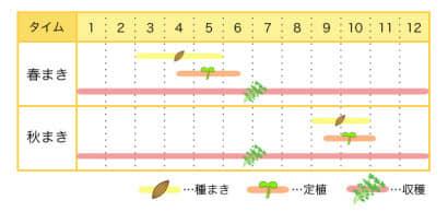 タイムのプランター栽培カレンダー