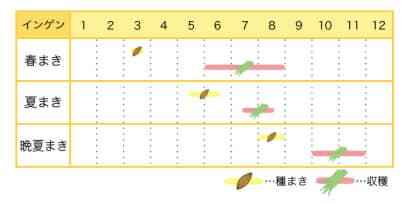 インゲンのプランター栽培カレンダー