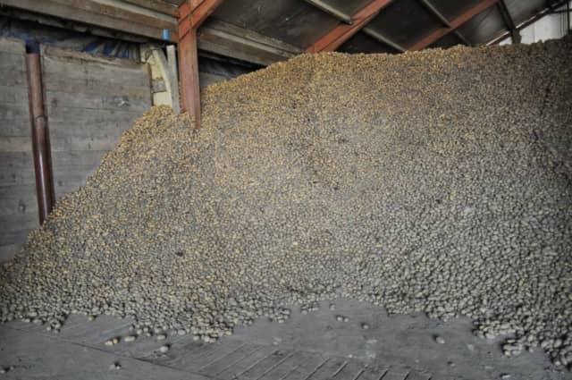 ジャガイモ貯蔵庫