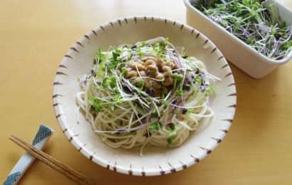 スプラウト 麺類
