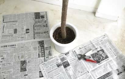 取り木の準備