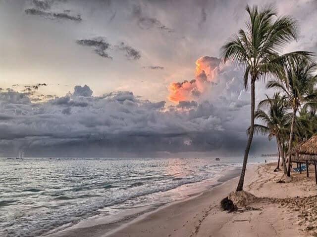 海沿いの木