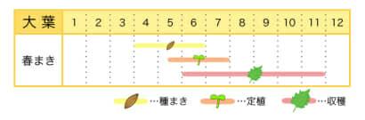 大葉のプランター栽培カレンダー