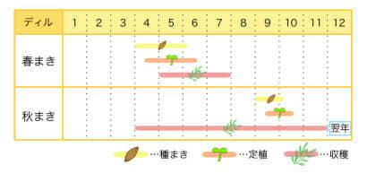 ディルのプランター栽培カレンダー