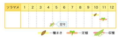ソラマメのプランター栽培カレンダー