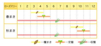ローズマリーのプランター栽培カレンダー