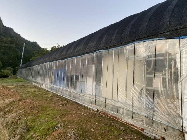 遮熱シートを施工したビニールハウス