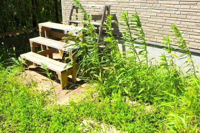 雑草がはえた庭
