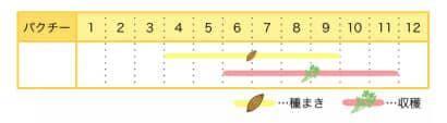 パクチーのプランター栽培カレンダー