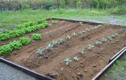 作物の植えられた畑