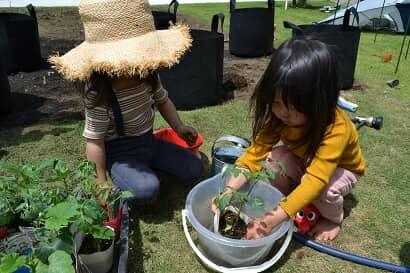 苗を水につける子どもたち
