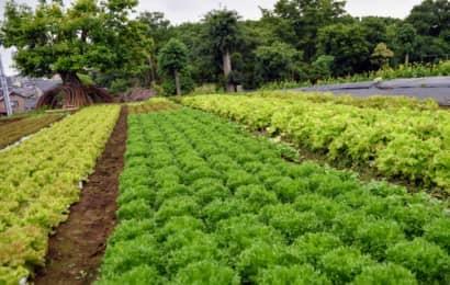 森田農園サラダ