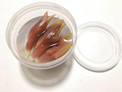 ミョウガの保存方法