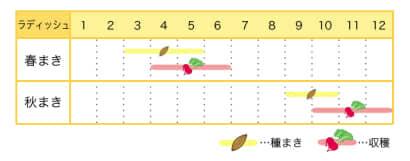 ラディッシュのプランター栽培カレンダー
